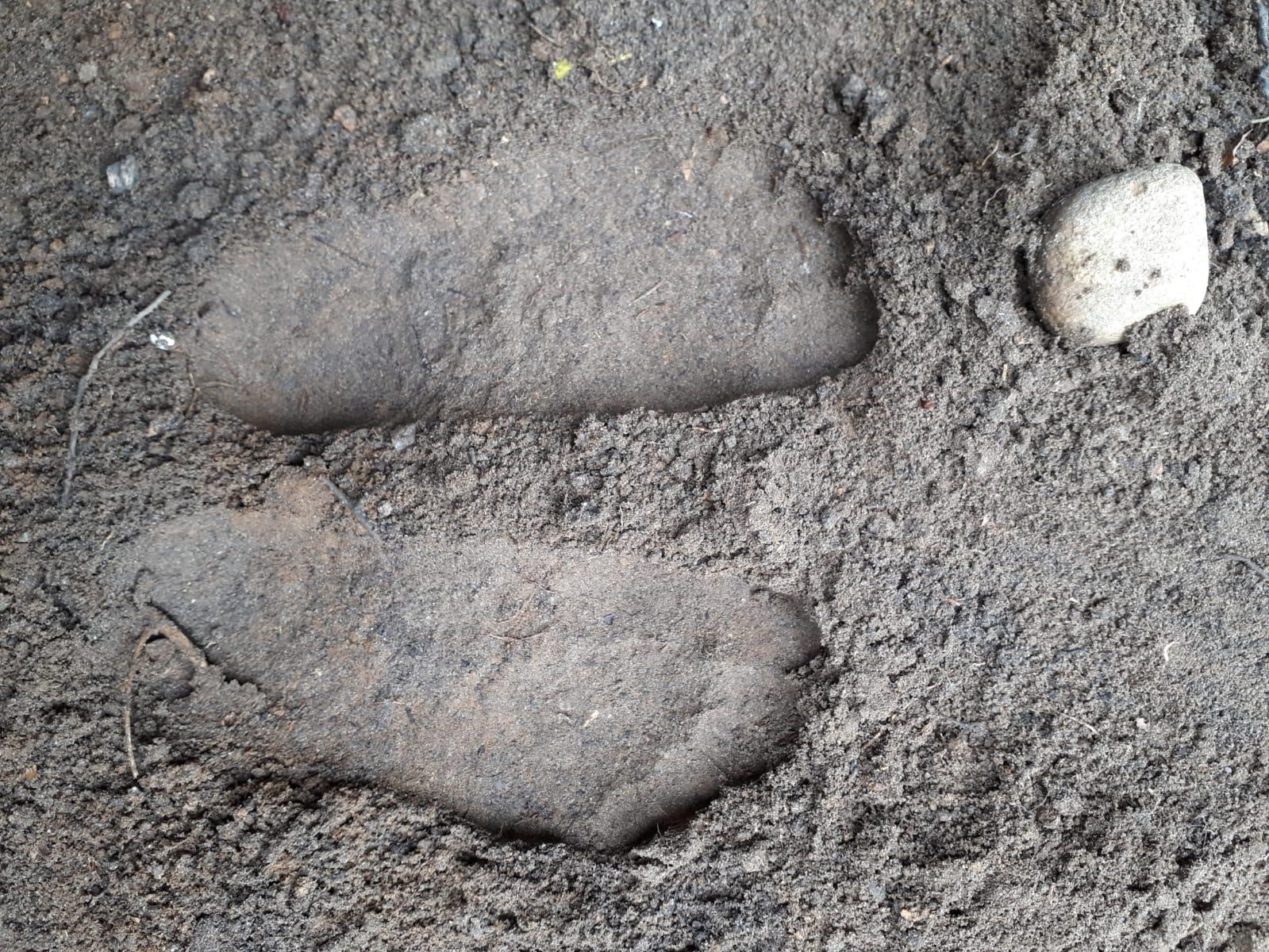 Fussabdrücke im Sand (Foto Zuzana Pizzileo, 2019)